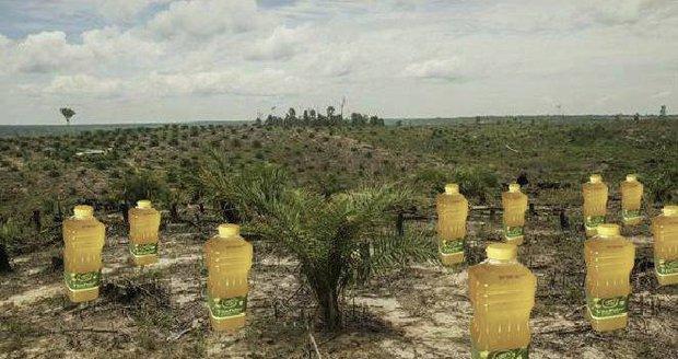 Historicky první zpráva o palmovém oleji byla přijata